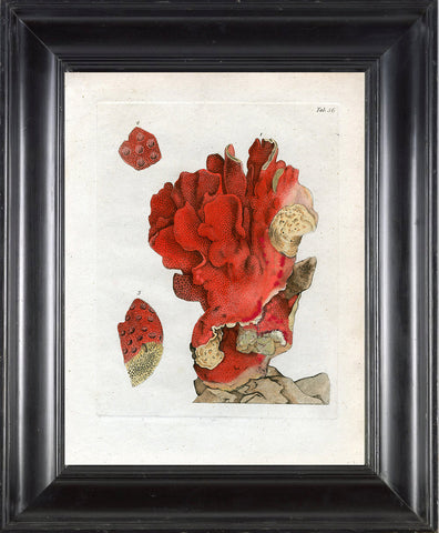CORAL PRINT Ellis  Art Print 24 Beautiful Antique Sea Ocean Red Coral Nature to Frame Home Decoration Wall Hanging