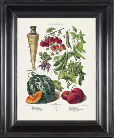 FRENCH VEGETABLE Garden  Botanical Art Print 1 Antique Beautiful Summer Plants Home Wall Decoration Seed Packet