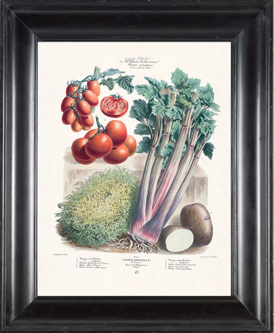 FRENCH VEGETABLE Garden  Botanical Art Print 3 Antique Beautiful Tomato Potato Salad Summer Plants Home Wall Decoration Seed Packet