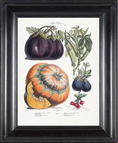FRENCH VEGETABLE Garden  Botanical Art Print 4 Antique Beautiful Orange Pumpkin Eggplant Summer Plants Wall Decoration Seed Packet