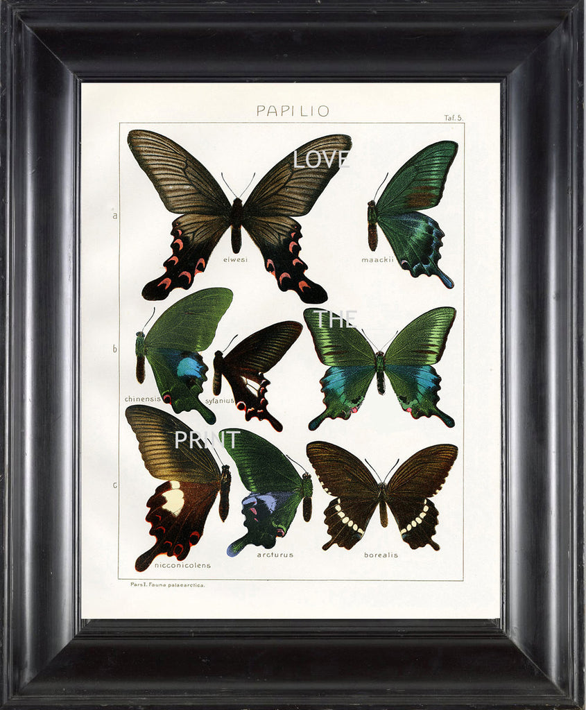 BUTTERFLY PRINT SEITZ  Art Print 4 Beautiful Antique Butterflies Nicconicolens and Borealis Aqua Green Brown Summer Garden Nature
