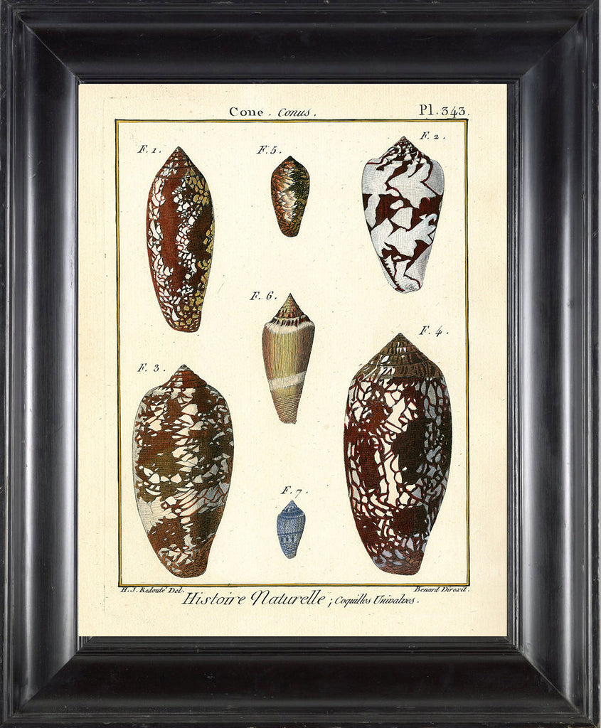 SHELL PRINT LAMARCK  Art Print 2 Beautiful Antique Cone Shells Sea Ocean Nature to Frame Home Decoration Wall Hanging