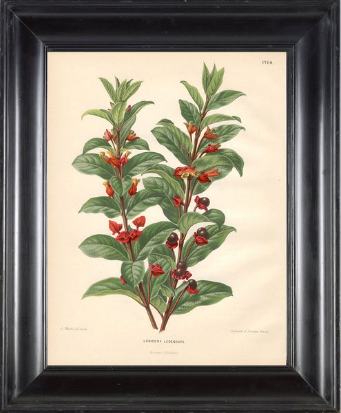 BOTANICAL PRINT Wendel  Botanical Art Print 13 Beautiful Berries Red Flowers Garden Plant to Frame Interior Decoration Room Design