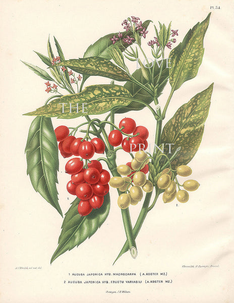 BOTANICAL PRINT Wendel  Botanical Art Print 8 Beautiful Red White Berries Brench Leaf Garden Plant to Frame