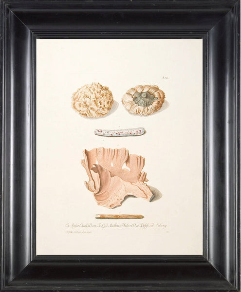 CORAL PRINT KNORR  Art Print 3 Beautiful Antique Corals to Frame Marine Sea Ocean Nature Natural Science