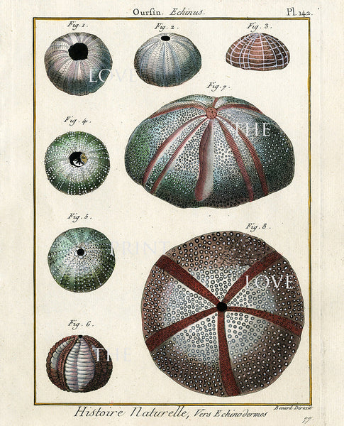 SEA URCHIN PRINT Lamarck Marine  Art Print 4 Beautiful Antique Sea Urchins Home Decor to Frame Sea Ocean Nature Natural Science