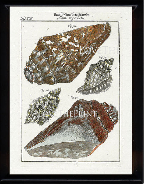 SHELL PRINT MARTINI  Art Print 1 Beautiful Antique Alatae Shells Sea Ocean Nature to Frame Home Decoration Wall Hanging