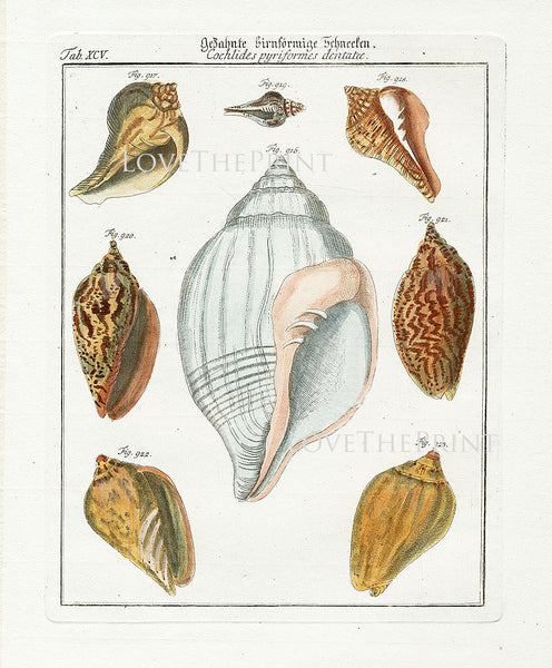 SHELL PRINT MARTINI  Art Print 4 Beautiful Antique Cochlides Shells Sea Ocean Nature to Frame Home Decoration Seashell