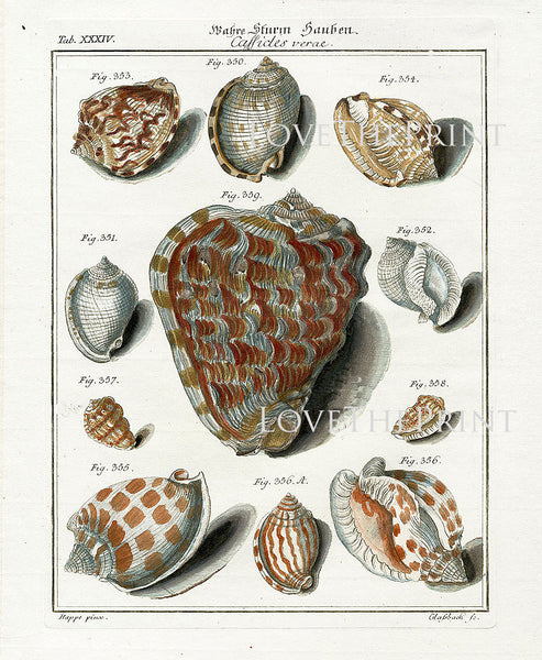 SHELL PRINT MARTINI  Art Print 2 Beautiful Antique Cassicles Shells Sea Ocean Nature to Frame Home Decoration Seashell