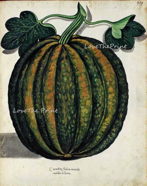ITALIAN VEGETABLE Garden Aldrovandi  Botanical Art Print 1 Antique Beautiful Pumpkin Summer Plants Home Wall Decoration