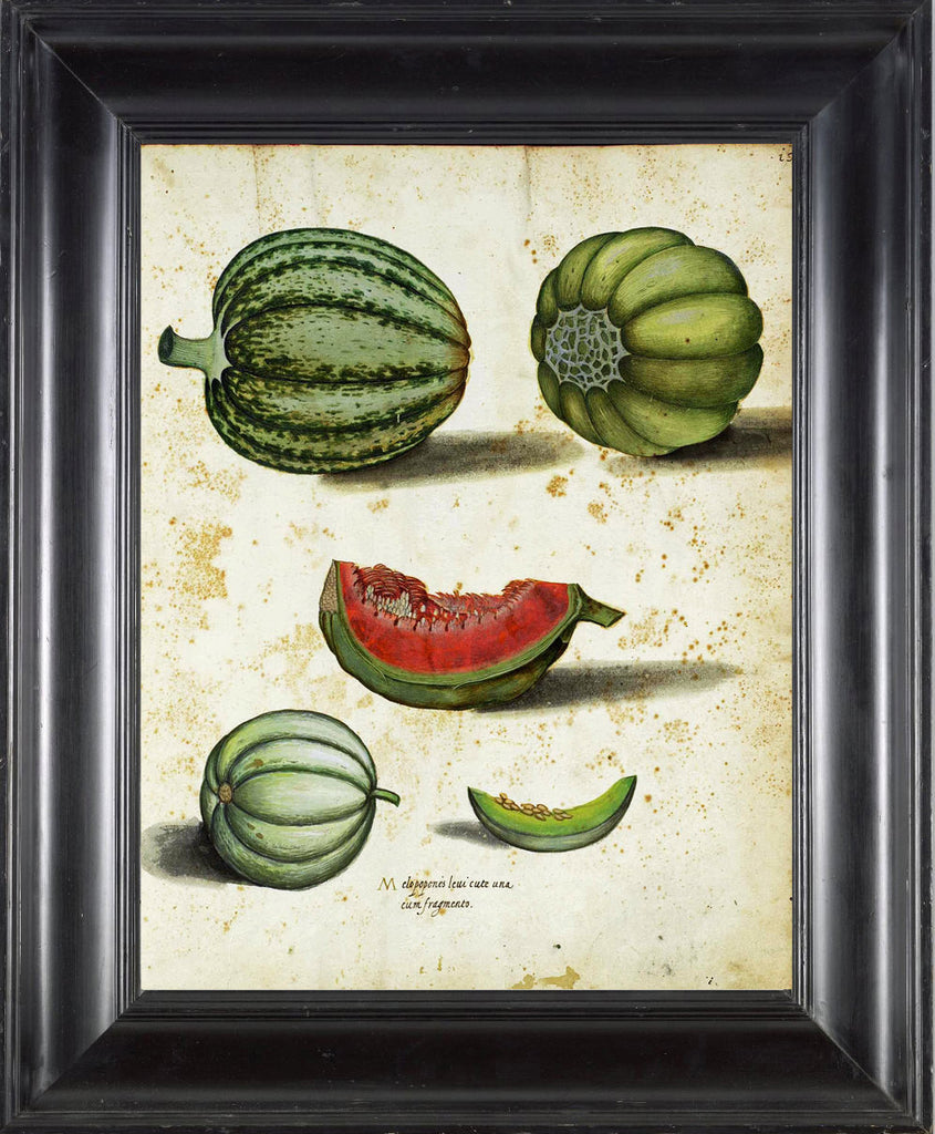 ITALIAN VEGETABLE Garden Aldrovandi  Art Print 9 Botanical Antique Beautiful Melon Plant Home Decor