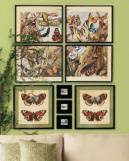 BUTTERFLY PRINT CRAMER  Botanical Art Print 4 Beautiful Antique Amasene Butterflies Yellow Orange White Black to Frame