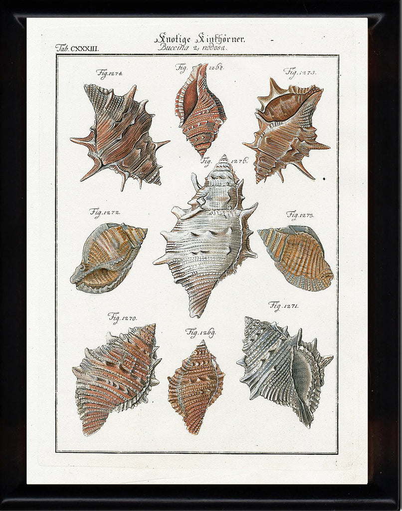SHELL PRINT MARTINI  Art Print 11 Beautiful Antique Buccina Shells Sea Ocean Nature to Frame Home Decoration Seashell