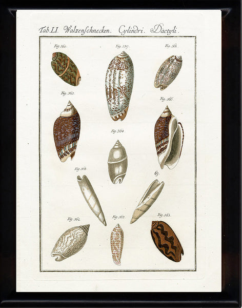 SHELL PRINT MARTINI  Art Print 12 Beautiful Antique Cone Shells Sea Ocean Nature to Frame Home Decoration Seashell