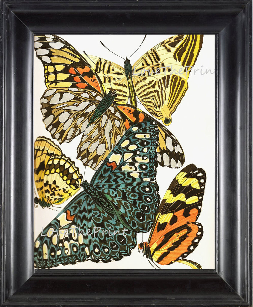 BUTTERFLY PRINT  Botanical Art Print 3 Beautiful Antique Large and Detailed Aqua Yellow Butterflies Insect Garden Home Nature Decoration