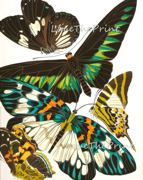 BUTTERFLY PRINT  Botanical Art Print 4 Beautiful Antique Large and Detailed Butterflies Spring Summer Flower Garden Home Decoration