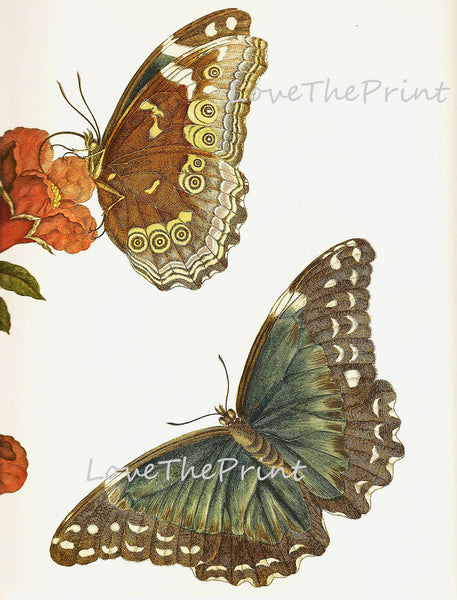 BUTTERFLY PRINT  Botanical Art Print 7 Beautiful Antique Butterfly Red Flower Colorful and Detailed Interior Design Room Decoration