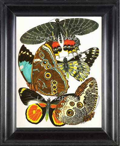 BUTTERFLY PRINT  Botanical Art Print 1 Beautiful Antique Blue Green Orange Red Butterflies Colorful and Detailed Summer Garden Nature