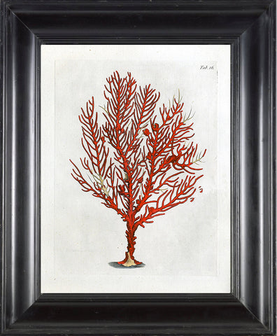 CORAL PRINT Ellis  Art Print 26 Beautiful Antique Sea Ocean Red Coral Nature to Frame Home Decoration Wall Hanging