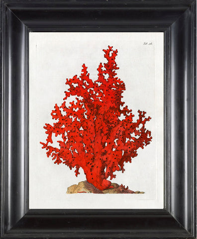 CORAL PRINT Ellis  Art Print 29 Beautiful Antique Sea Ocean Red Coral Nature to Frame Home Decoration Wall Hanging
