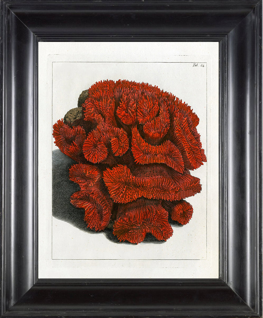 CORAL PRINT Ellis  Art Print 30 Beautiful Antique Sea Ocean Red Coral Nature to Frame Home Decoration Wall Hanging