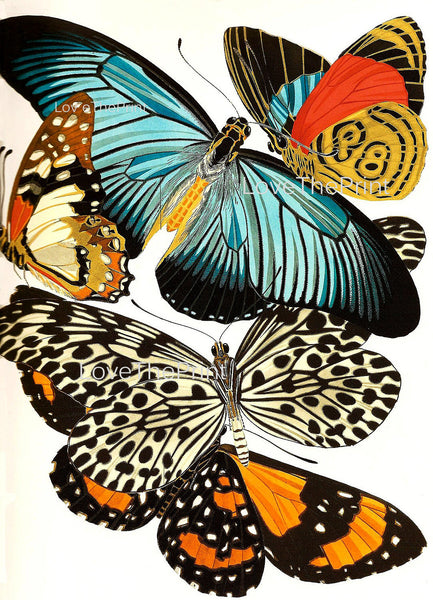 BUTTERFLY PRINT  Botanical Art Print 14 Beautiful Blue Green Orange Red Butterflies Colorful and Detailed Summer Garden Nature