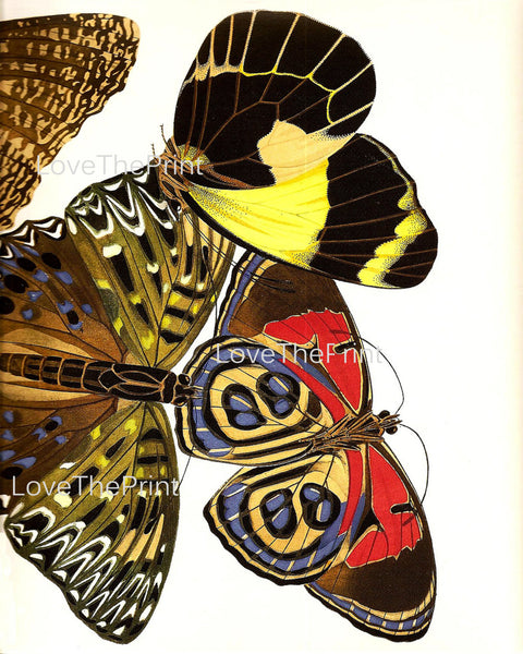 BUTTERFLY PRINT  Botanical Art Print 16 Beautiful Large Yellow Red Butterflies Colorful and Detailed Summer Garden Nature