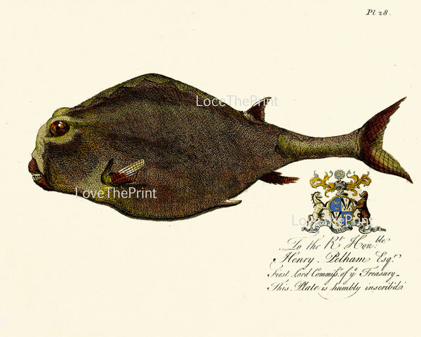 FISH PRINT Marine  Art Print 53 Beautiful Antique Large Whimsical Fish Royal Crown Emblem Home Decor to Frame Sea Ocean Natural Science