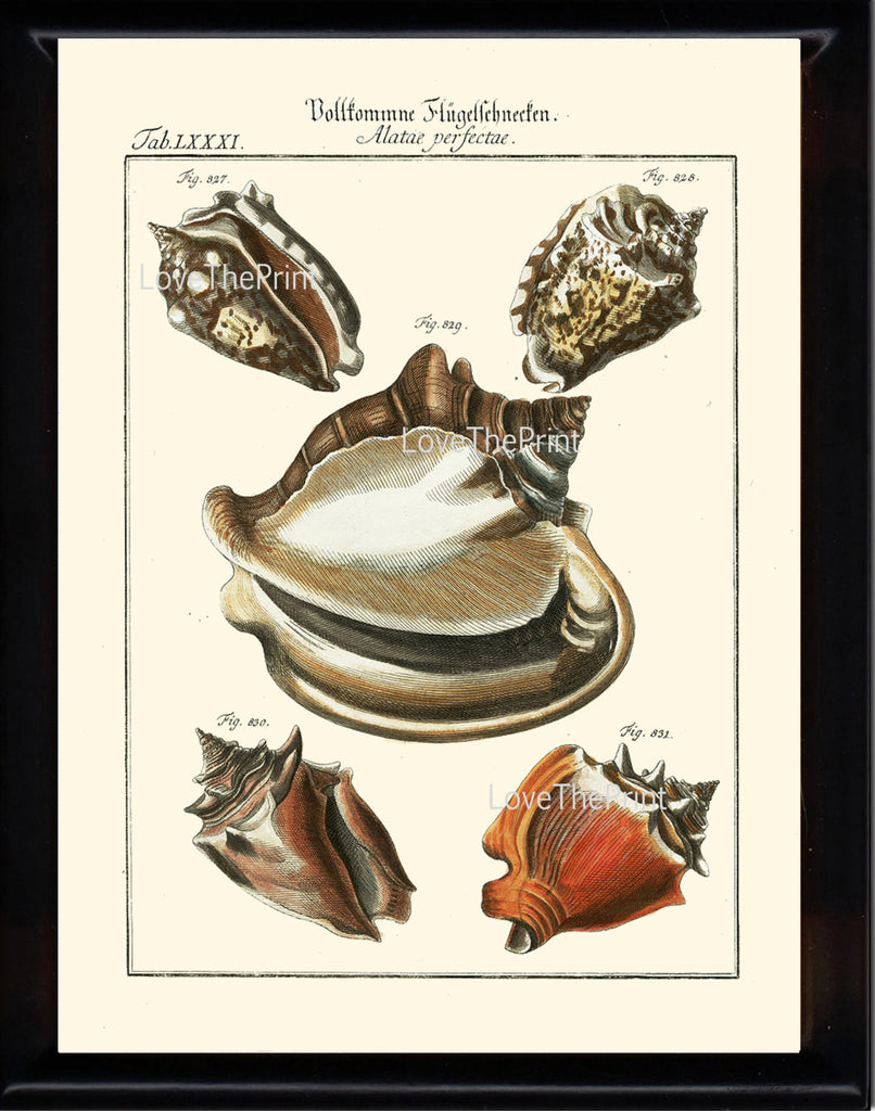 SHELL PRINT MARTINI  Art Print 15 Beautiful Antique Alatae Shells Sea Ocean Nature to Frame Home Decoration Seashell