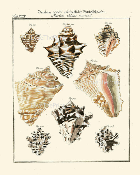 SHELL PRINT MARTINI  Art Print 19 Beautiful Antique Murices Shells Sea Ocean Nature to Frame Home Decoration Seashell