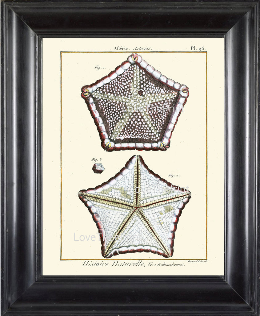 MARINE PRINT Lamarck Marine  Art Print 14 Beautiful Antique Sea Star Starfish Home Decor to Frame Sea Ocean Nature Natural Science
