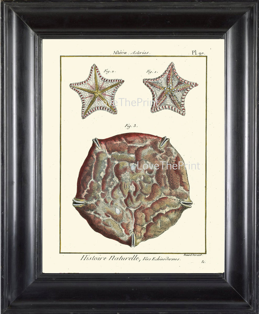 MARINE PRINT Lamarck Marine  Art Print 7 Beautiful Antique Sea Star Starfish Home Decor to Frame Sea Ocean Nature Natural Science