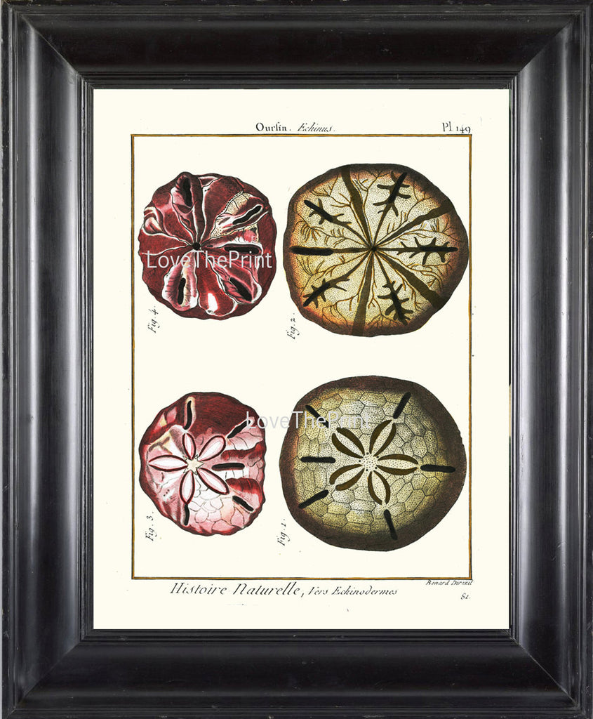 SAND DOLLAR PRINT Lamarck Marine  Art Print 17 Beautiful Antique Sand Dollars Home Decor to Frame Sea Ocean Nature Natural Science