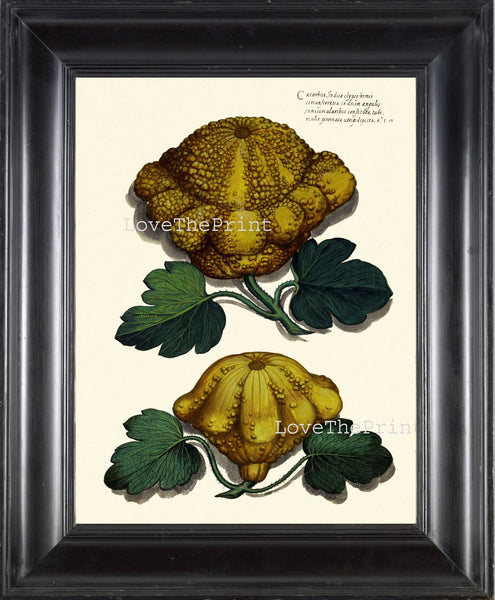 ITALIAN VEGETABLE Garden Aldrovandi  Art Print 24 Botanical Antique Beautiful Squash Pumpkin Plant to Frame Home Decor