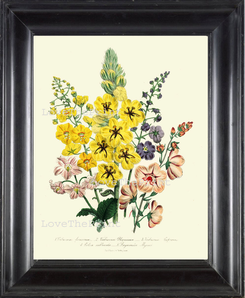 BOTANICAL PRINT Loudon Flower  Botanical Art Print 73 Beautiful Yellow Antique Flowers Delphinium Wildlowers Garden
