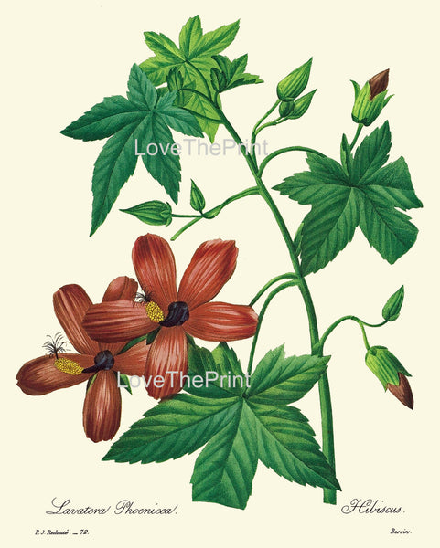 BOTANICAL PRINT Redoute Flower  Botanical Art Print 33 Beautiful Red Hibiscus Tropical Plant Garden Nature to Frame Home Decor