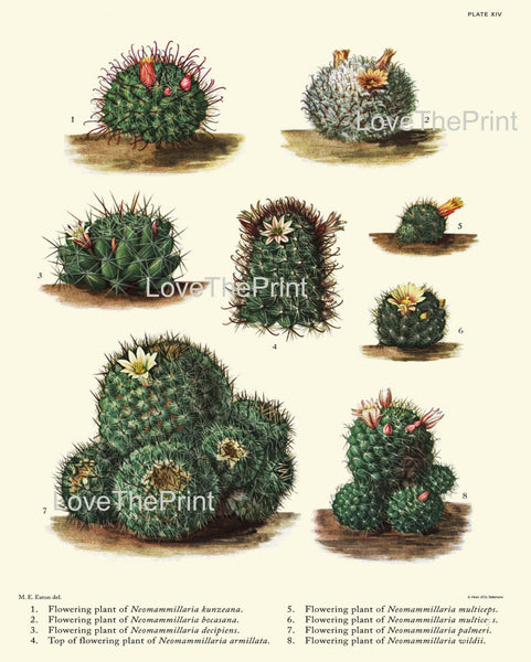 BOTANICAL PRINT CACTUS  Art Print 7 Beautiful Cactus Plants Flower Tropical Illustration Garden Nature Home Wall Decor to Frame