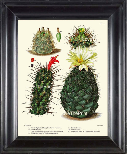 BOTANICAL PRINT CACTUS  Art Print 9 Beautiful Blooming White Red Flower Tropical Garden Nature Home Office Wall Decor to Frame