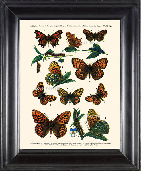 EUROPEAN BUTTERFLY PRINT  Botanical Art Print 4 Beautiful Butterflies Caterpillar Spring Summer Flower Garden to Frame