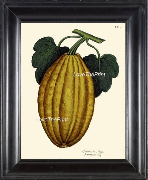 ITALIAN VEGETABLE Garden Aldrovandi  Botanical Art Print 12 Antique Beautiful Gourd Squash Plant Home Decoration