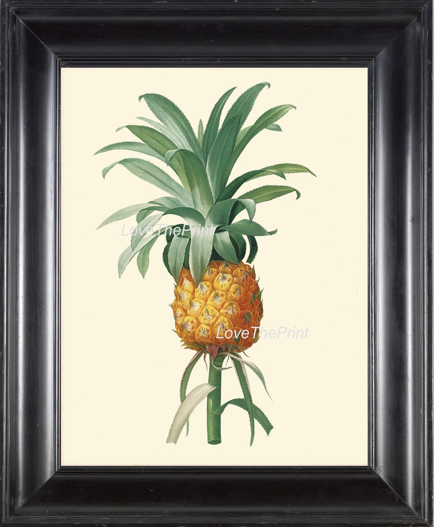 BOTANICAL PRINT Redoute  Art Print 276 Beautiful Large Pineapple Fruit Print Antique Wall Home Decoration Tropical Garden Plant to Frame