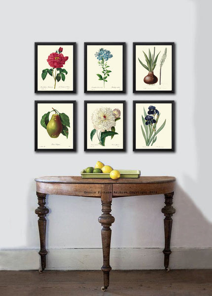 BOTANICAL PRINT Redoute  Art Print 79 Beautiful Bird of Paradise Antique Flower Wall Home Wall Decoration Spring Garden Plant to Frame