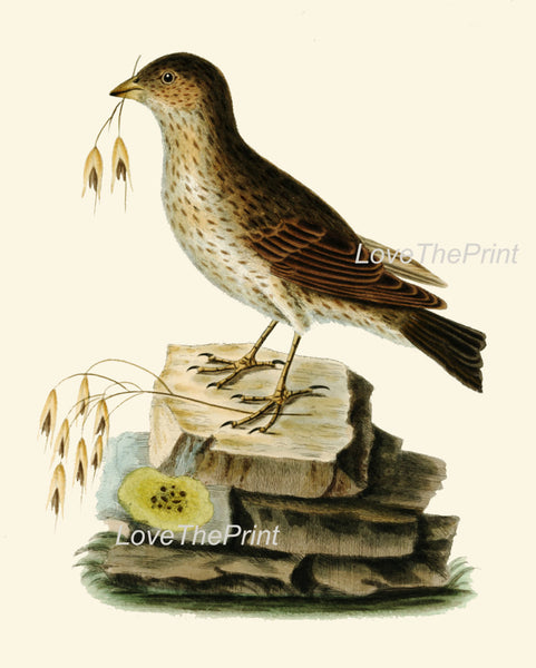 BIRD EGGS  Art Print B10 Beautiful Antique Bunting Bird Forest Nature Green Decoration Wall Hanging Home Living Room Interior Design