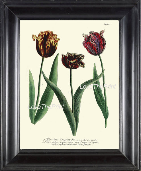 BOTANICAL PRINT  Art Print W27 Beautiful Antique Tulips Spring Summer Garden Plant Chart Nature to Frame Living Dining Room Home Decor