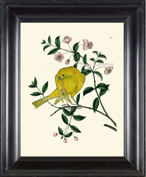 BIRD EGGS  Art Print B3 Beautiful Antique Yellow Canary Bird Pink Flowers Tree Branch Wall Hanging Home Living Room Interior Design