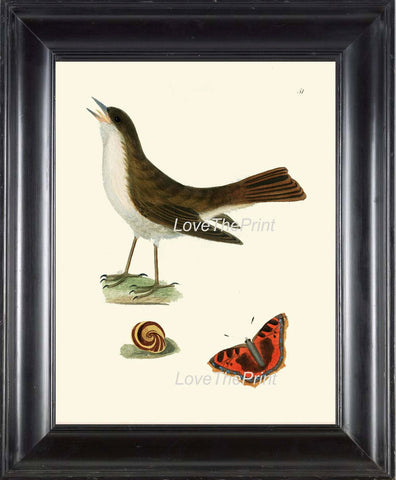BIRD PRINT 8x10 Art B14 Beautiful Nightingale Antique Bird Butterfly Snail Wall Home Room Forest Nature Natural Science Plate to Frame