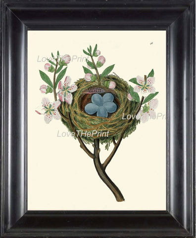 BIRD EGGS  Art B37 Beautiful Nest Blue Eggs Blooming Fruit Apple Tree Flowers Spring Branch Antique Illustration Home Decor to Frame