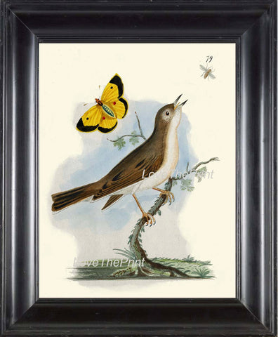 BIRD PRINT 8x10 Art B36 Beautiful Bird Bee Yellow Butterfly Tree Branch Spring Summer Forest Nature Home Room Decor Wall to Frame Picture
