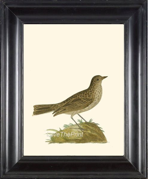BIRD Print 8x10 Art B29 Beautiful Antique Bird on Ivory Illustration Plate Picture Wall Home Room Forest Nature to Frame Interior Design