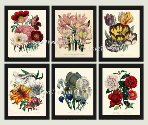 BOTANICAL Print SET of 6 Art Print  Loudon Antique Blue Iris Lily Tulip Flower Spring Summer Plant Nature to Frame Home Decor Garden